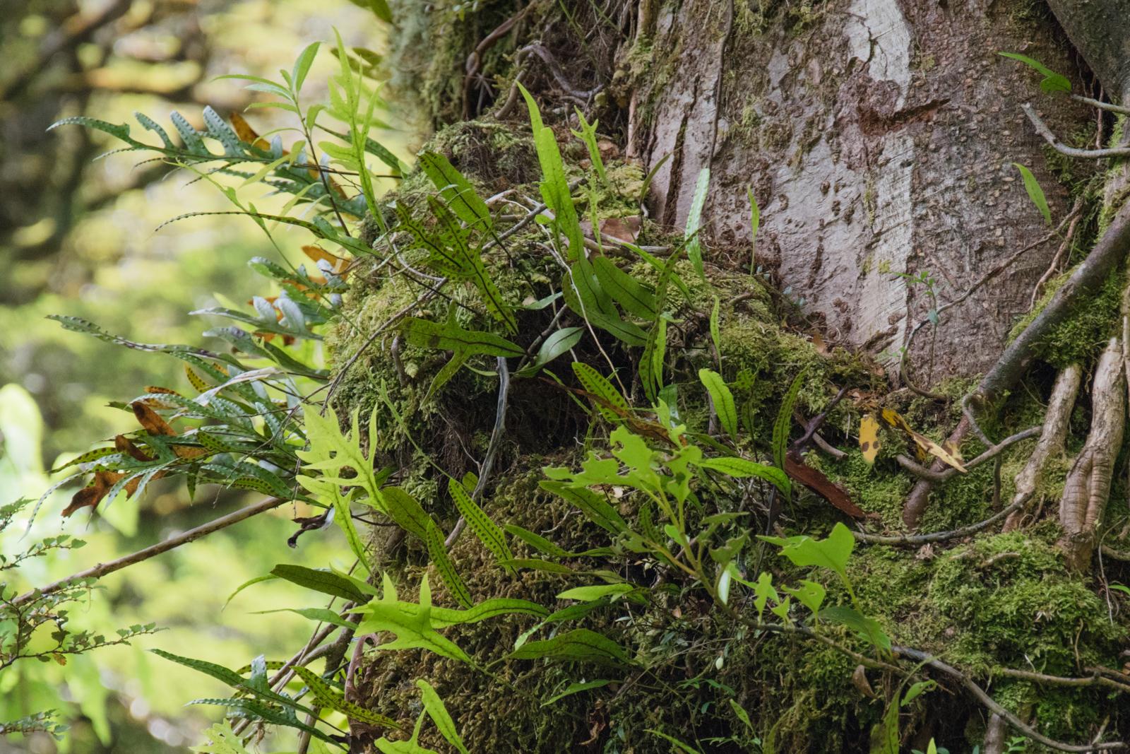 Bewachsener Baum